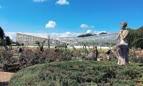 神代植物公園で満開のバラ