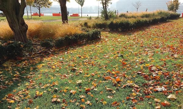 ブダペストの秋の景色