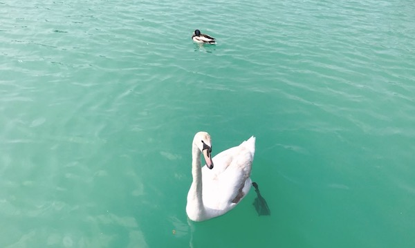 海のような美しいグリーン色のバラトン湖が見られる「シオーフォク(Siófok)」